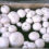 Growing-your-own-mushrooms-oyster-mushrooms-shiitake-mushrooms-and-white-button