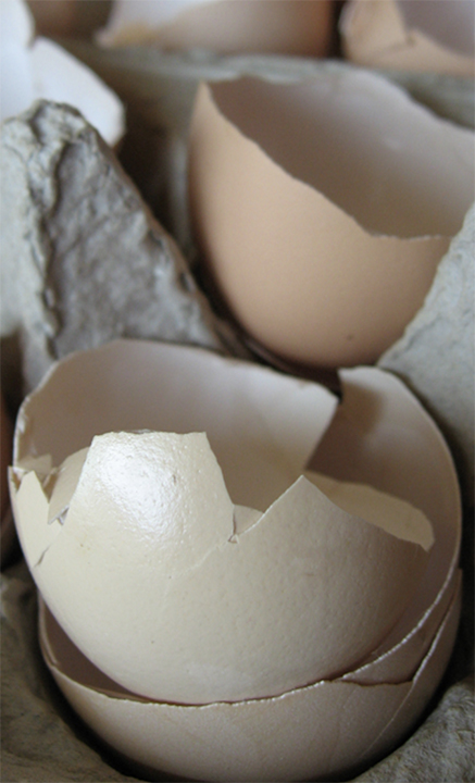 eggshells in an egg carton for the garden