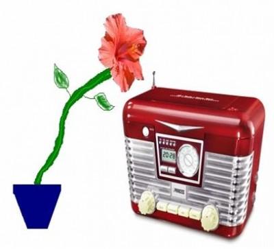 Flower in a pot listening to a wireless