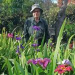 Louiaiana-Iris-how-to-propagate-Irises-from-Seed