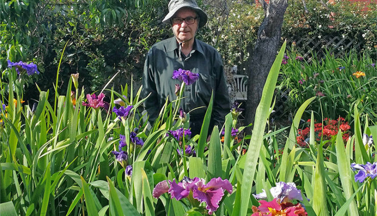 Louiaiana-Iris-how-to-propagate-Irises-from-Seed