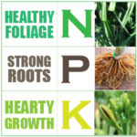 NPK Dose for Daylilies Fertilisers-Nitrogen Phosphorus Potassium