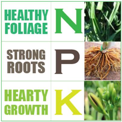 NPK Dose for Daylilies Fertilisers-Nitrogen Phosphorus Potassium