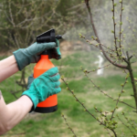 lady Spraying fruit trees