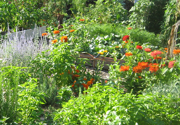 Permaculture-Gardening-1