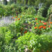 Permaculture No Dig Gardening