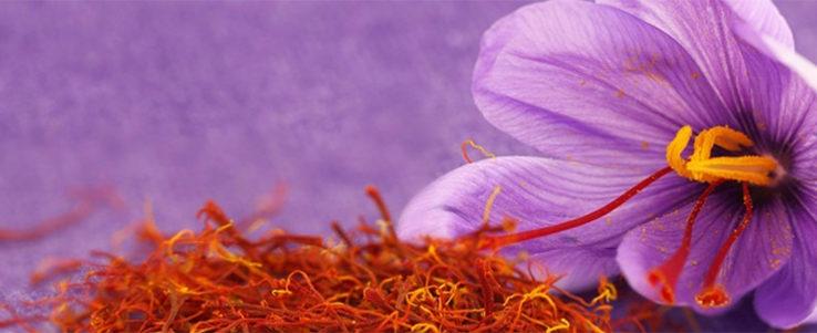 Saffron Crocus Expensive Delicacy Home Cooking Needs