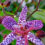 Toad-Lily-Grow-Best-Full-Shade-All-Day