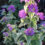 Variegated-Plants-Variegated-Plant-Problems-Know-How-to-Stop-Variegation-in-Plants