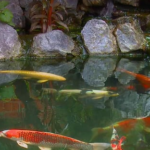 clean fish pond in the garden with waterfall