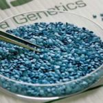 GMO's-Or-Genetically-Modified-Seeds in a glass bowl