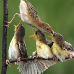Spring birds feeding their young on a branch