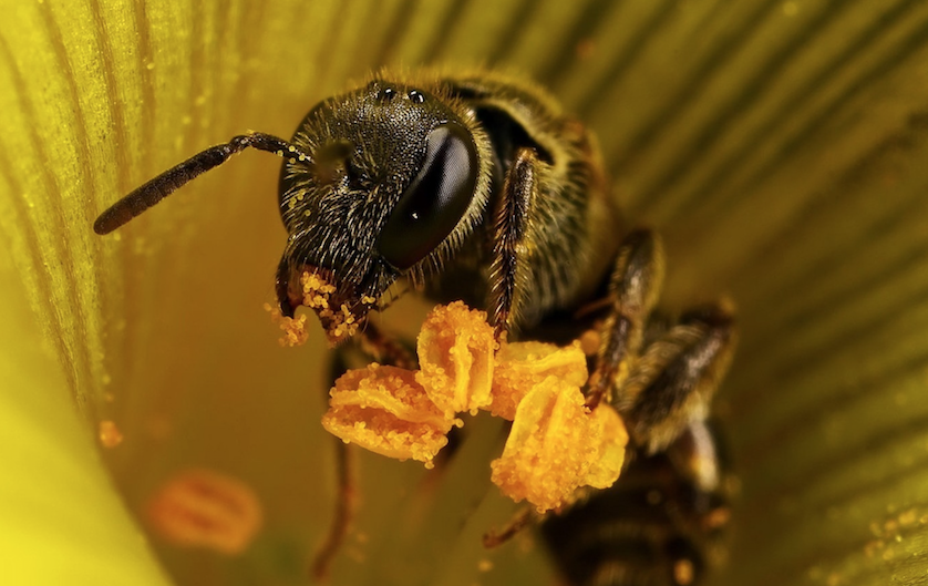 attract-bees-into-your-garden