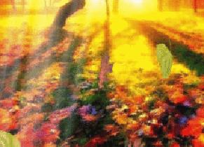 autumn leaves deciduous trees autumn