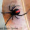 best-natural-spider-pest-control-methods-Red-back-spider