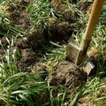 over turning green manures in the soil