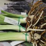 Buy fresh plants guaranteed to grow quicker